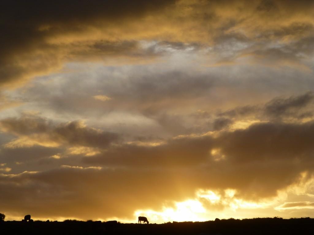 SunsetCow (1500x1125)